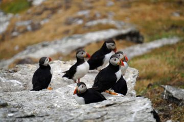Four top reasons for team bonding on the Skellig coast while whale, dolphin and marine wildlife watching