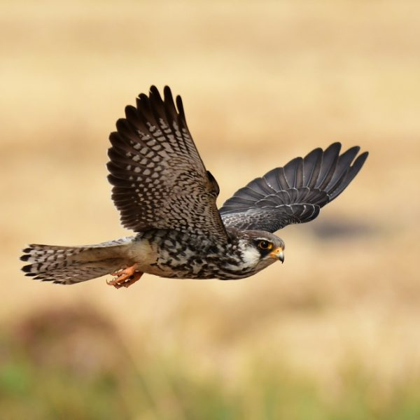 Four exciting reasons for taking your office team building day out to a falconry